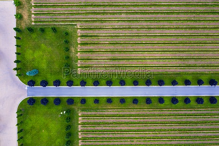 aerial, view, of, vineyard, and, the - 30153372
