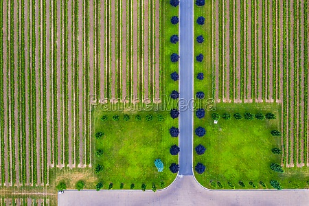 aerial, view, of, vineyard, and, the - 30153373