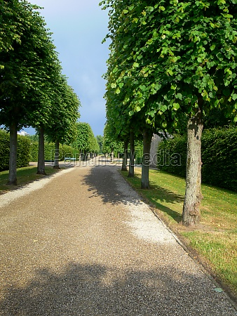 an avenue idyllic landscapes planted by