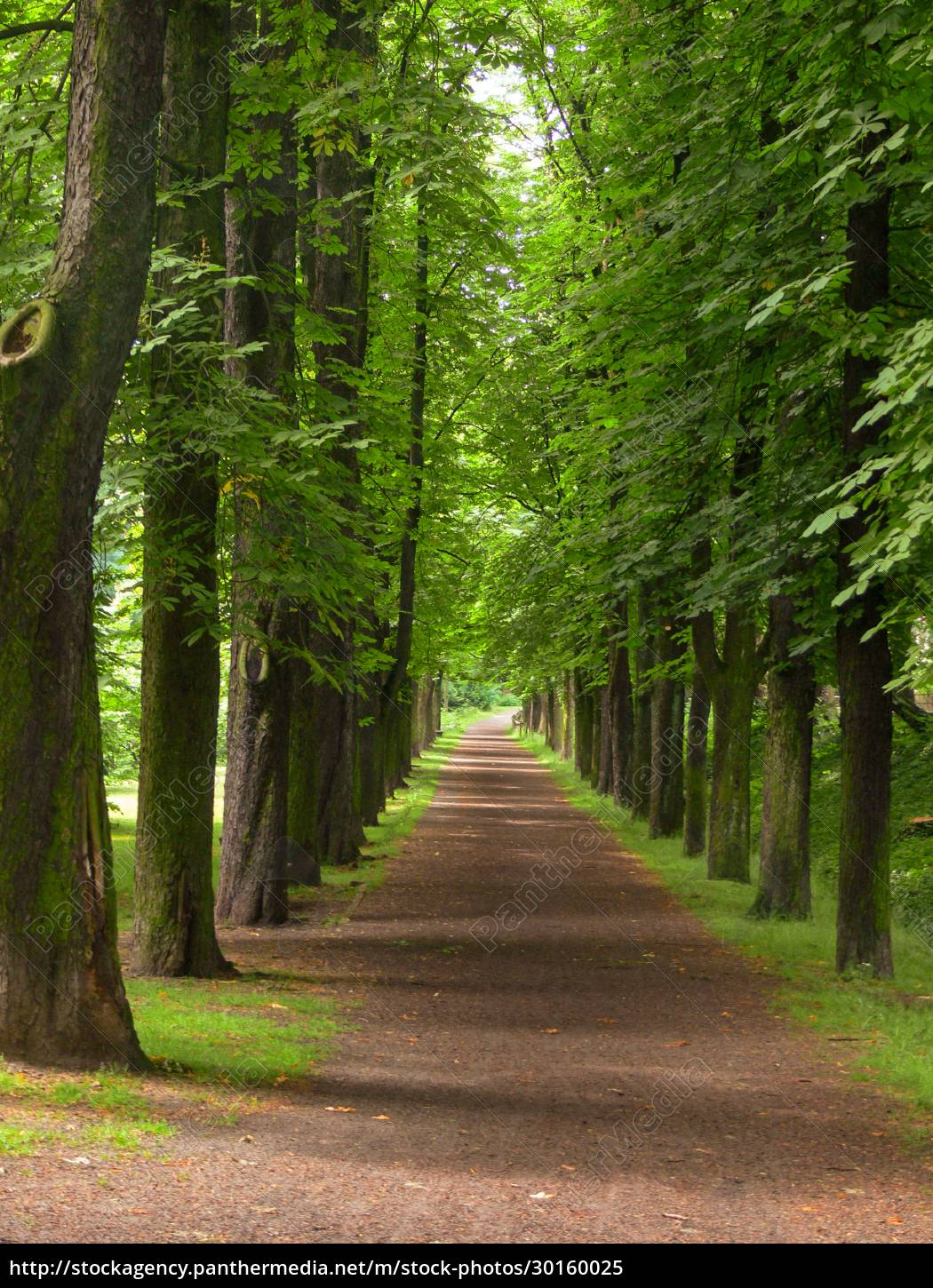 an, avenue, , idyllic, landscapes, planted, by - 30160025