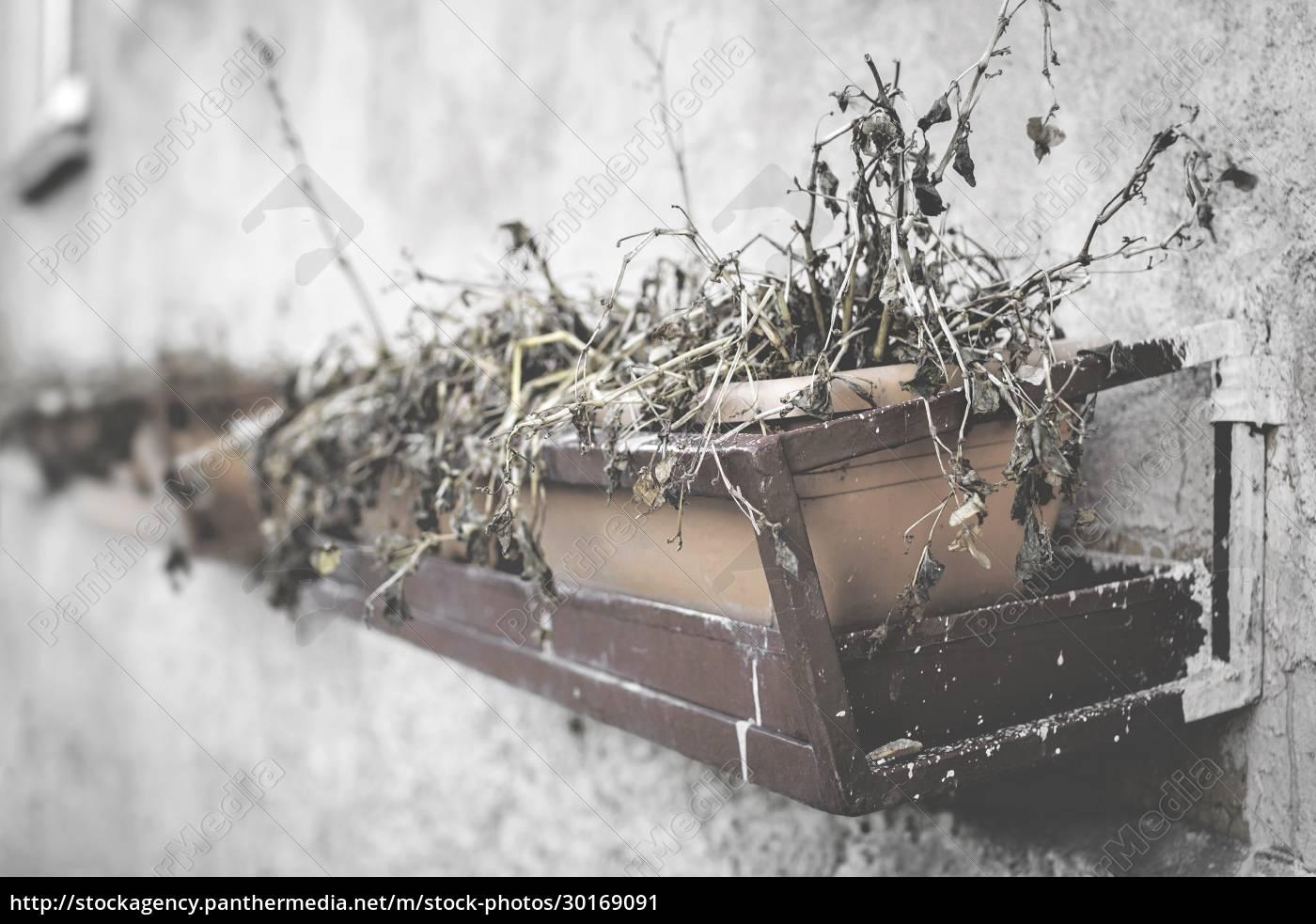 dead, plants - 30169091
