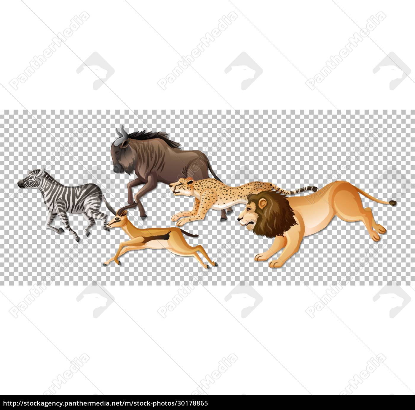 group, of, wild, african, animals, on - 30178865