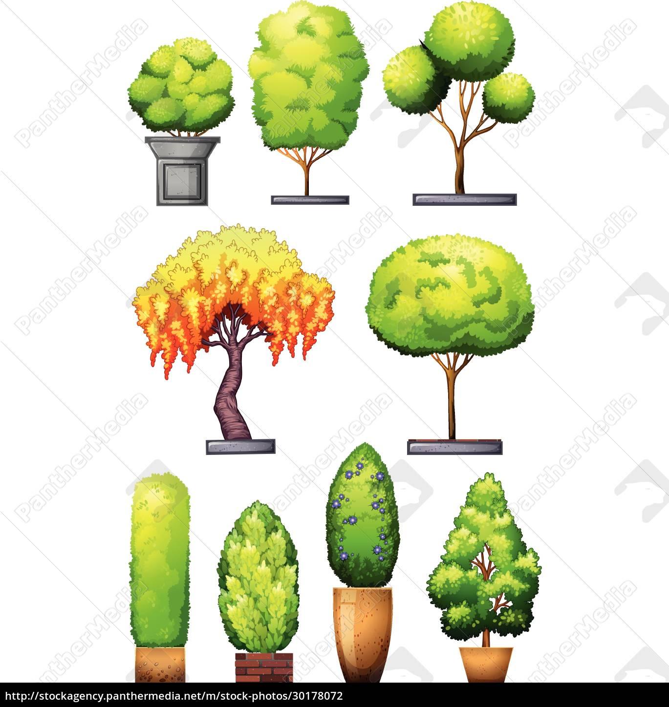 sets, of, decorative, plants - 30178072