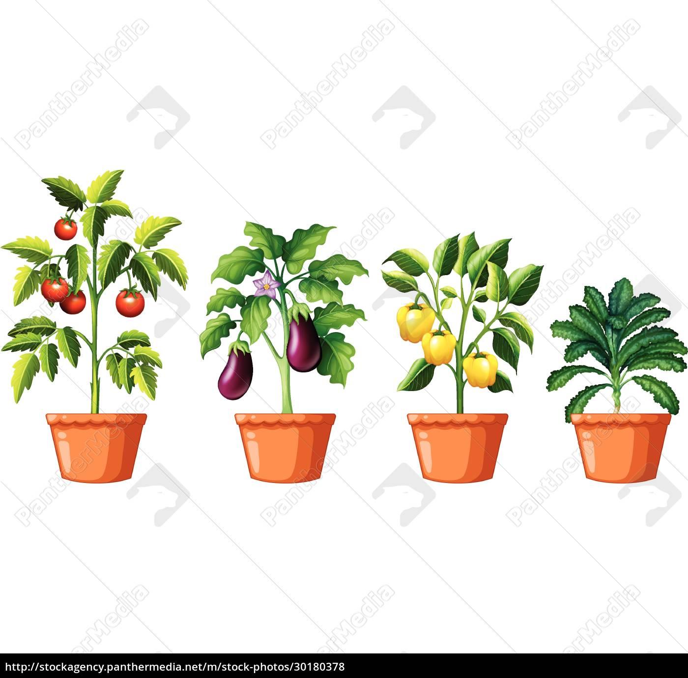 set, of, different, plants - 30180378