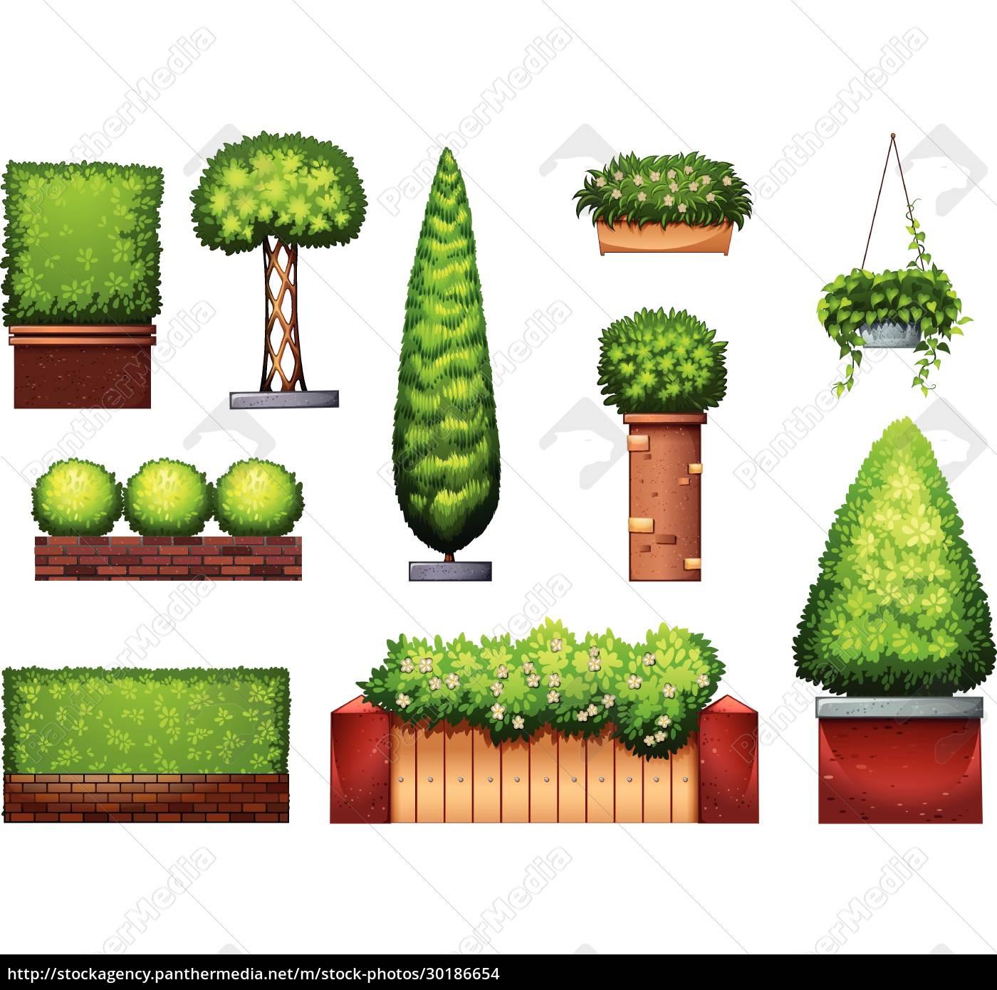 plants - 30186654