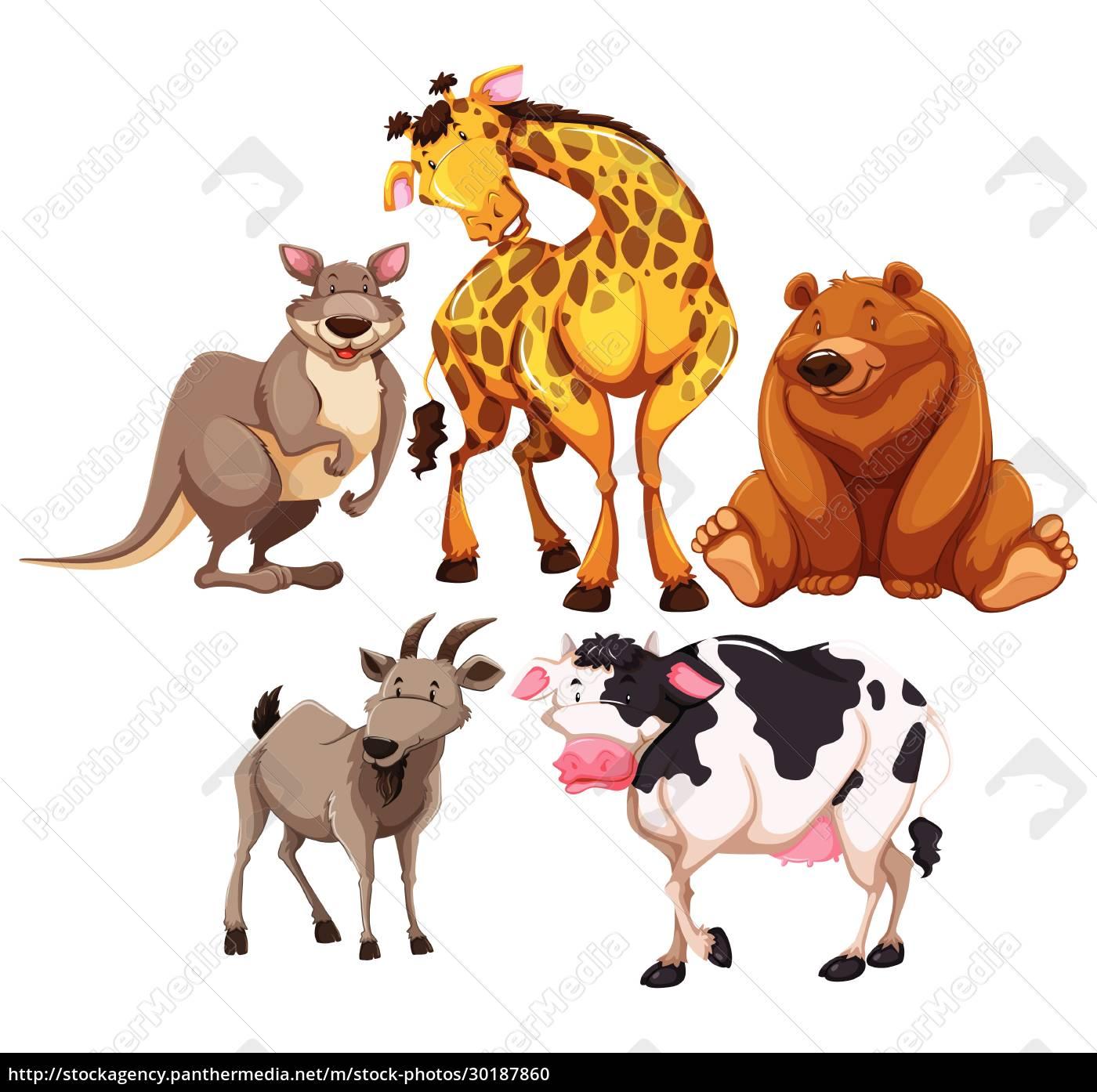 animals - 30187860
