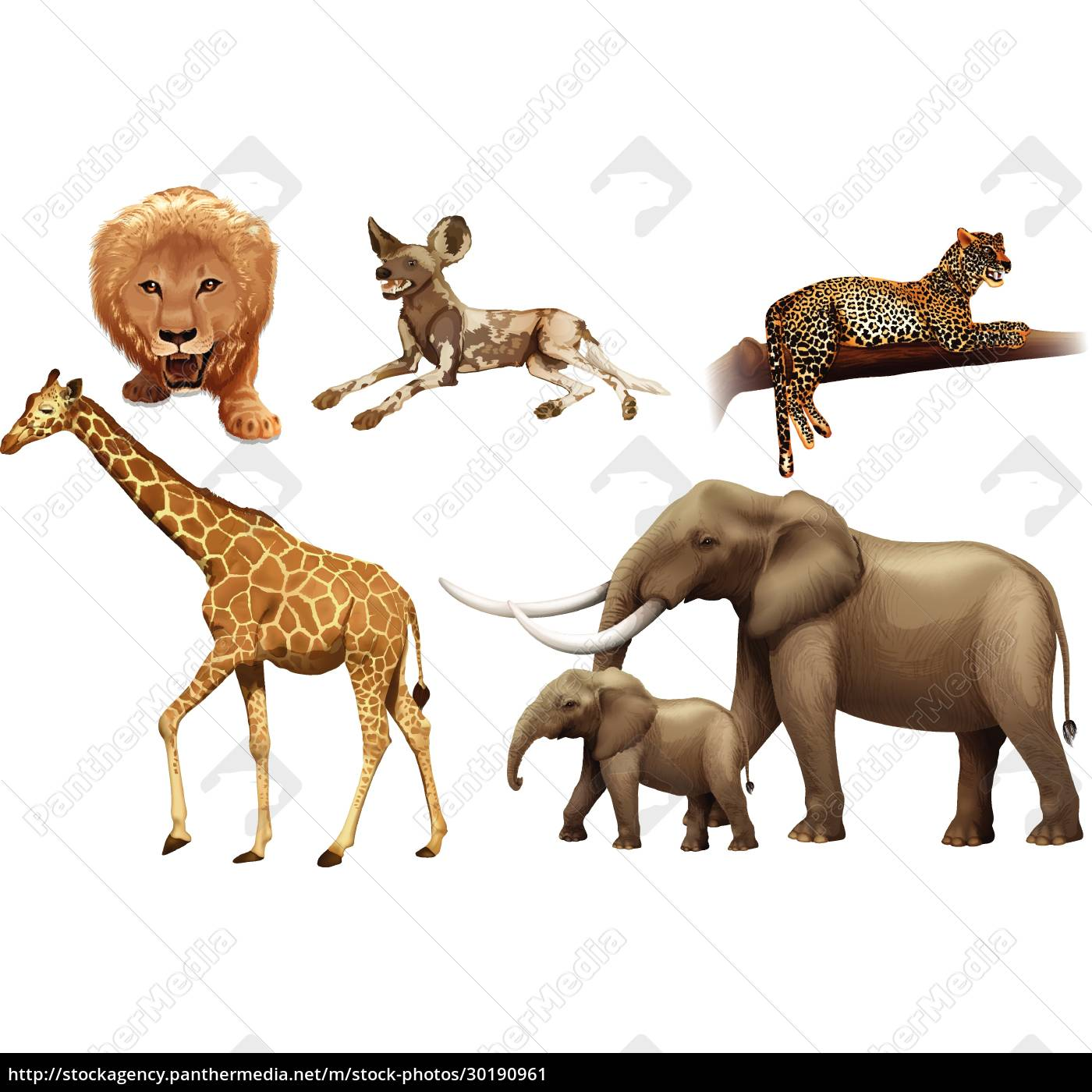 african, animals - 30190961