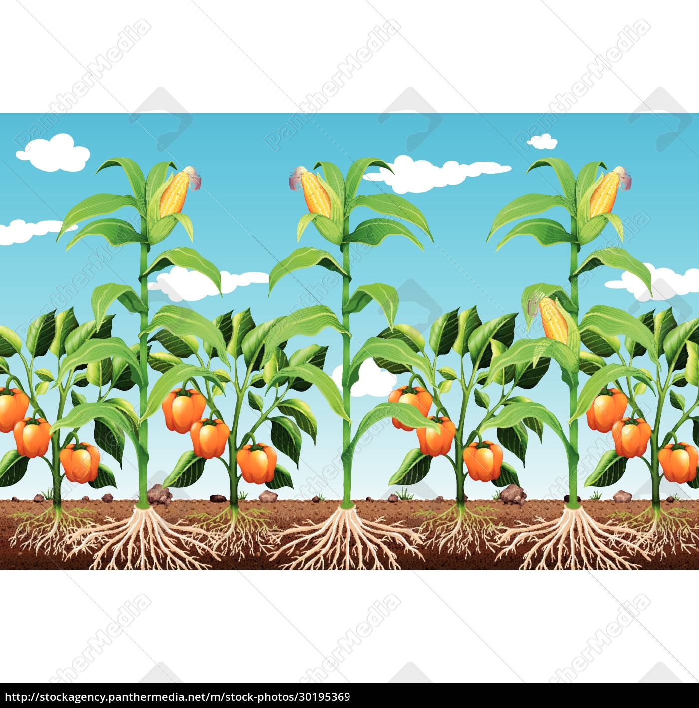 a, farming, plants, and, root - 30195369