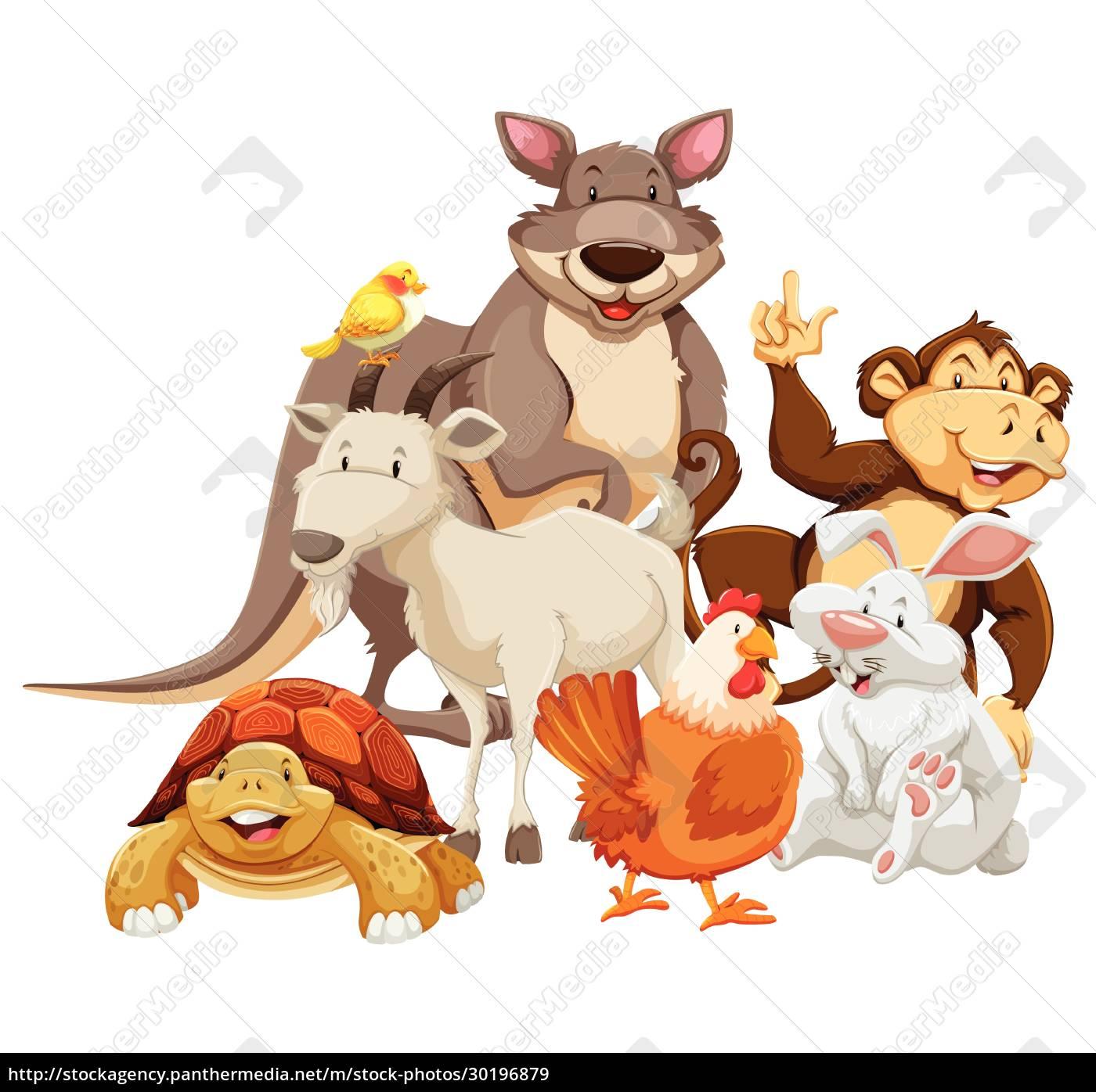 animals - 30196879