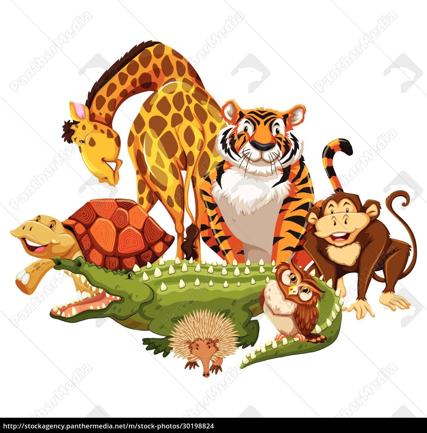 animals - 30198824