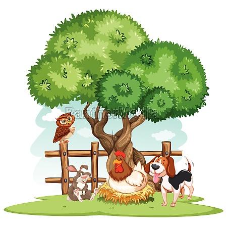 animals - 30201948