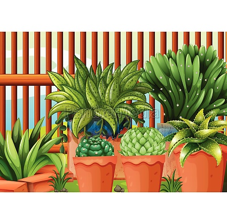 pots, with, plants - 30203864