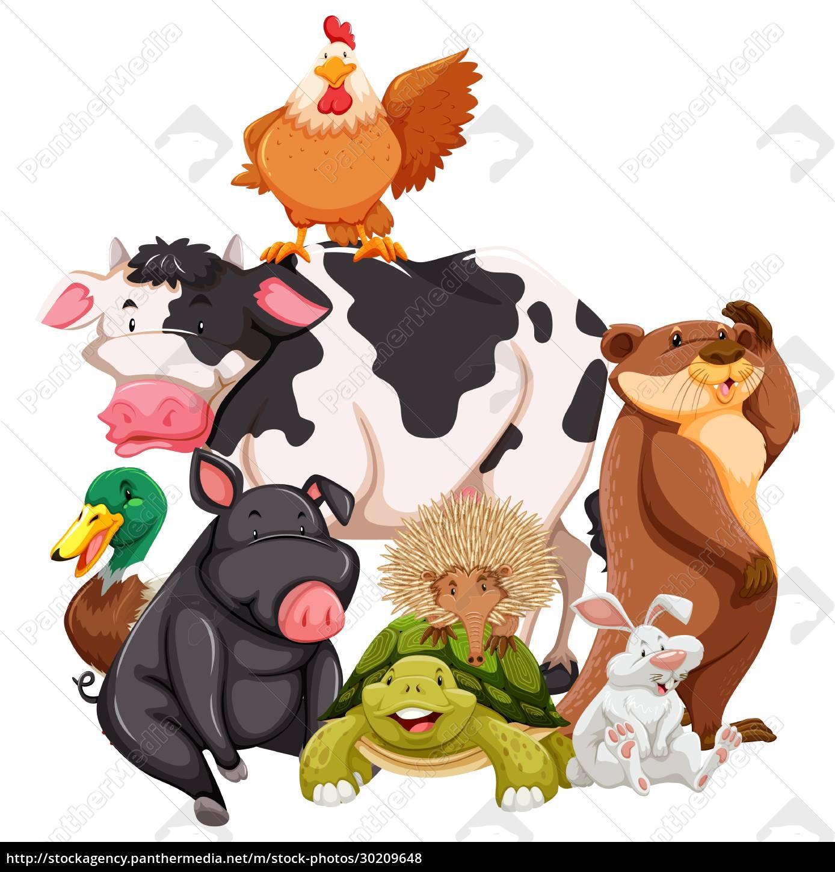 animals - 30209648
