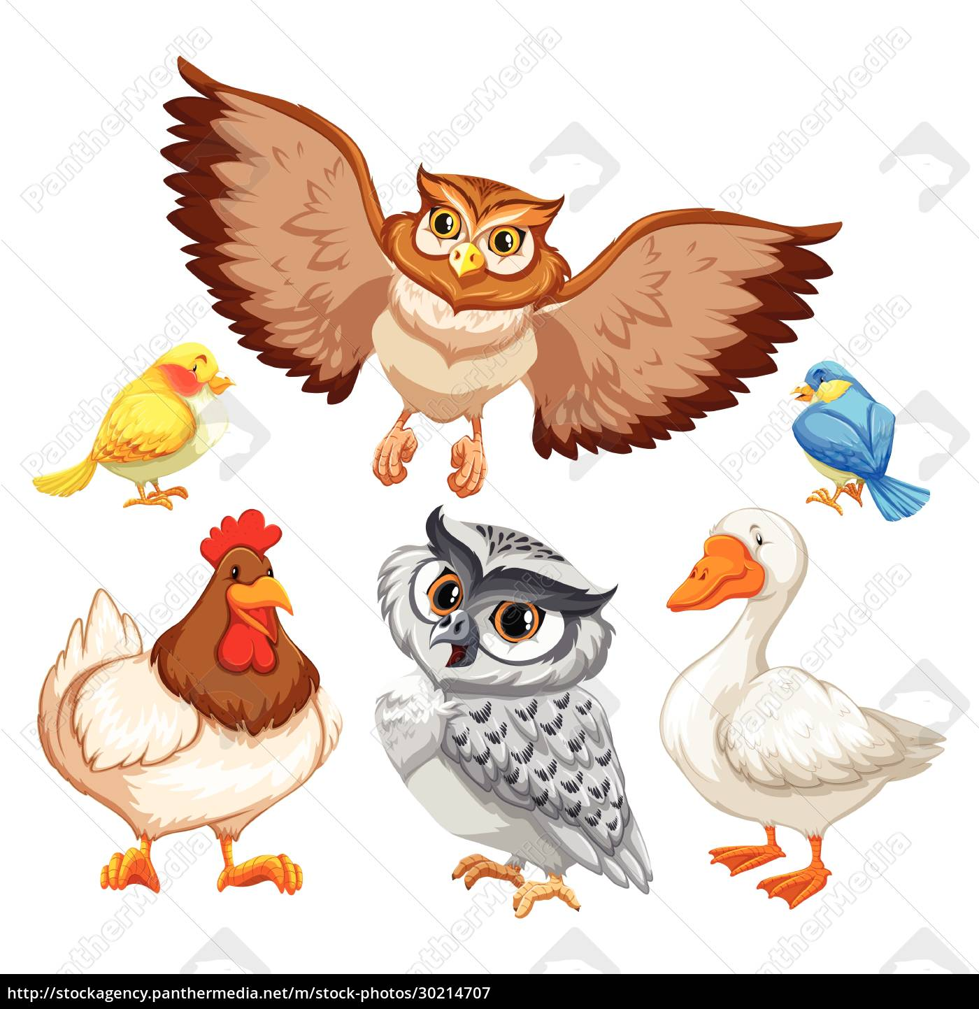 animals - 30214707