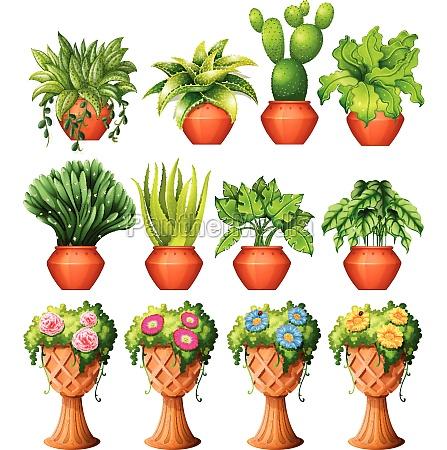 set, of, plants, in, pots - 30215433