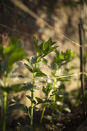 plants, growing, behind, twine, in, garden - 30219040
