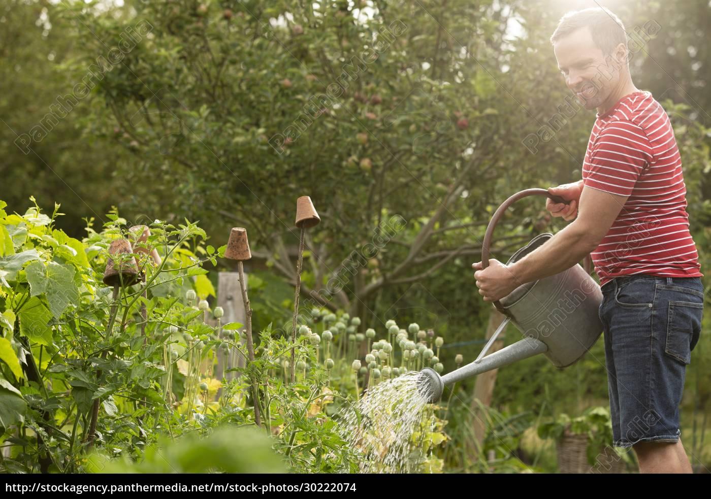 man, watering, plants, in, lush, summer - 30222074