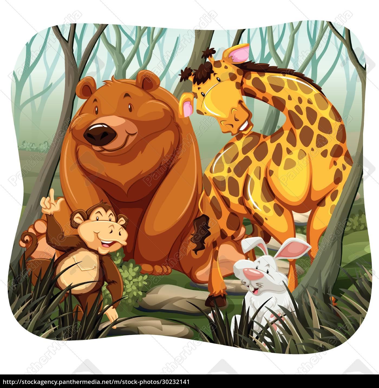 animals - 30232141