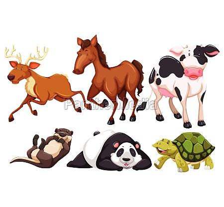 animals - 30232917