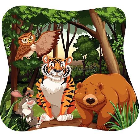 animals - 30238175