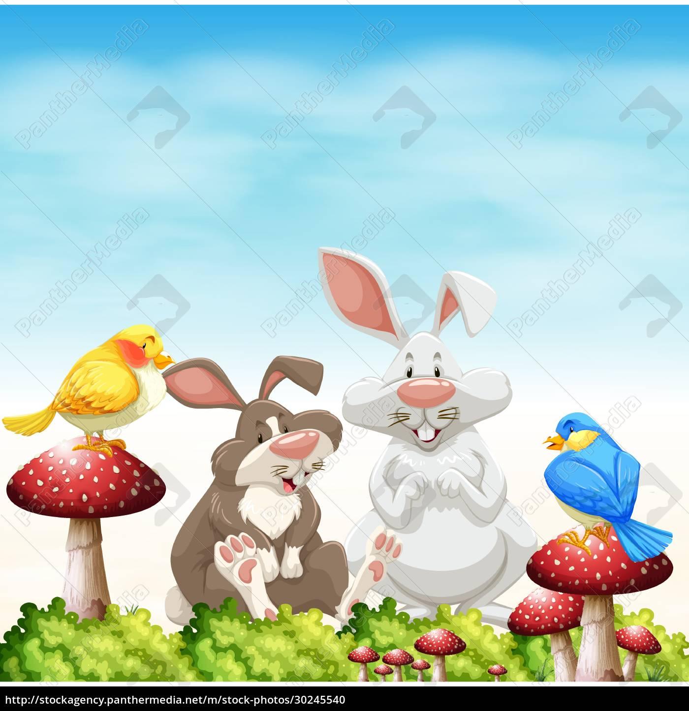 animals - 30245540