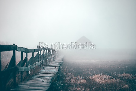 wooden, path, surrounded, by, green, reeds - 30247848