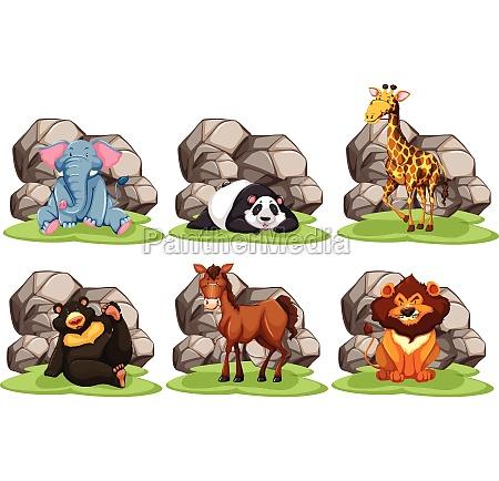 animals - 30250195