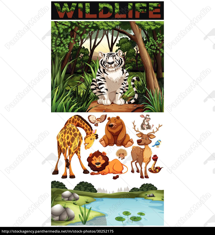 wild, animals, in, the, jungle - 30252175