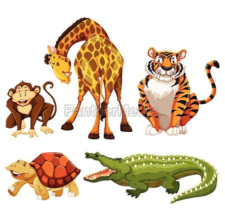 animals - 30256593