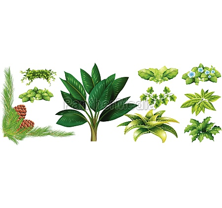 different, types, of, plants - 30260303