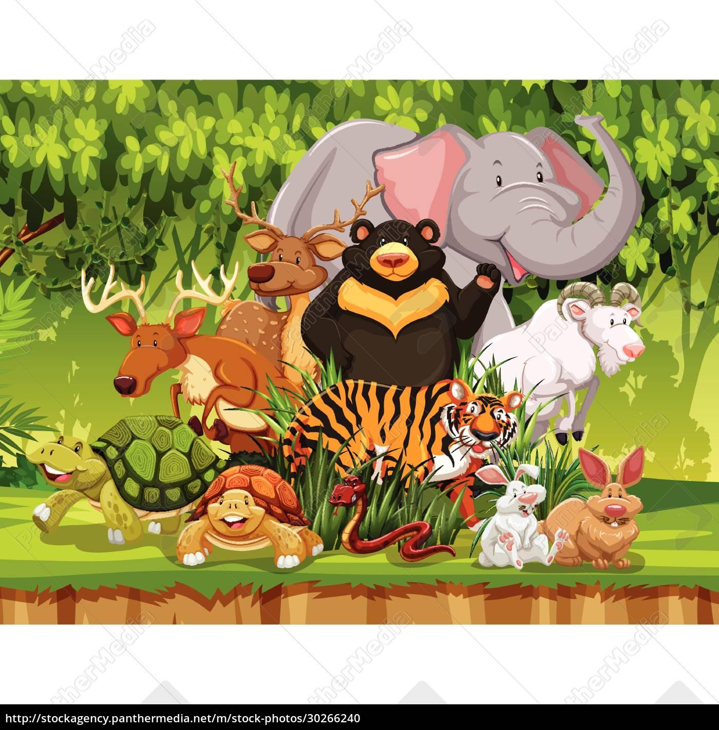 wild, animals, in, the, forest - 30266240