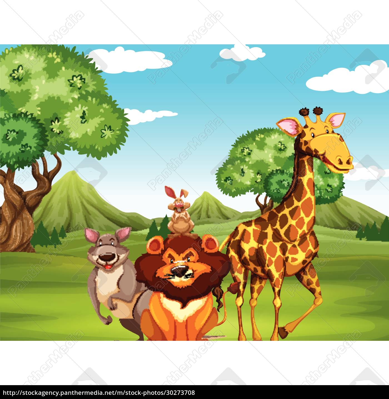wild, animals, in, the, field - 30273708