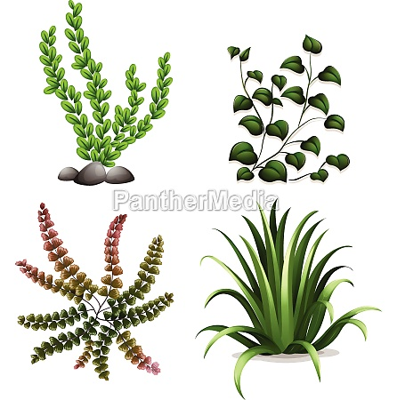 plants - 30315431