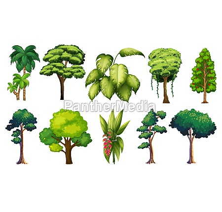 set, of, variety, plants, and, trees - 30356924