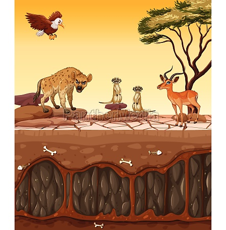 a, dry, land, and, wild, animals - 30402666