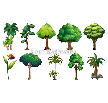 set, of, variety, plants, and, trees - 30451366