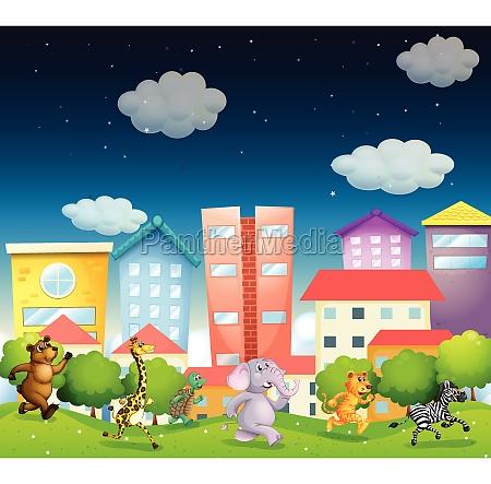 animals, and, city - 30453898