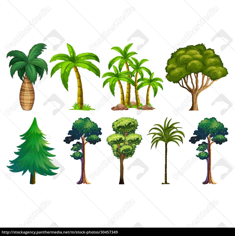 set, von, sortenpflanzen, und, bäumen - 30457349