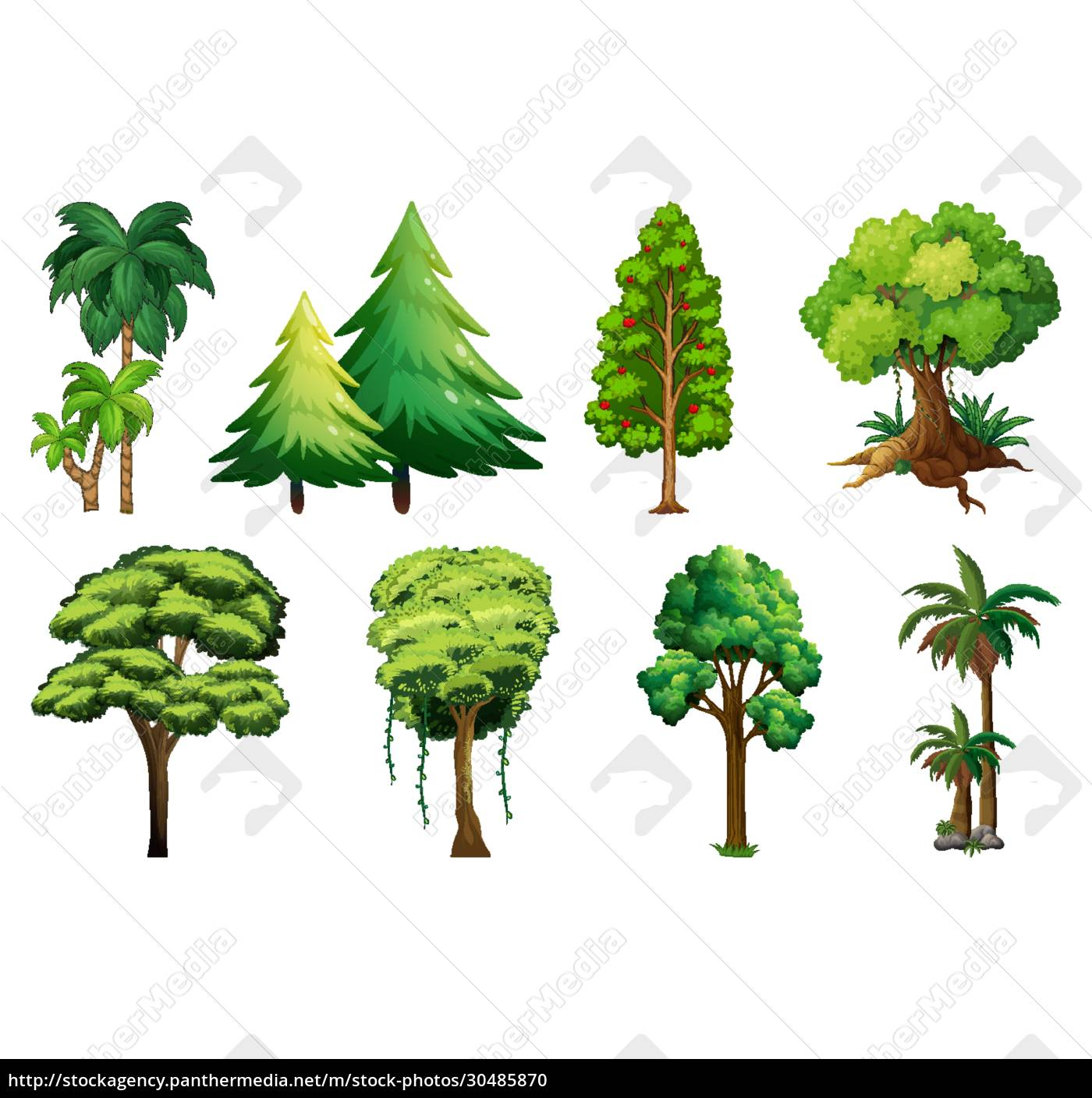 set, of, variety, plants, and, trees - 30485870