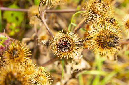 field, dried, spiny, plants, in, the - 30615281