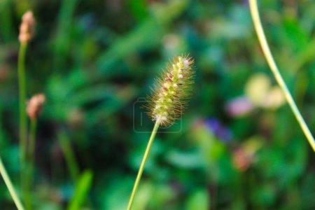 grün, niemand, Nahaufnahme, Gras, Wiese, im Freien - B361650134