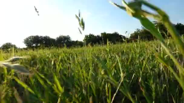 Video B132810604