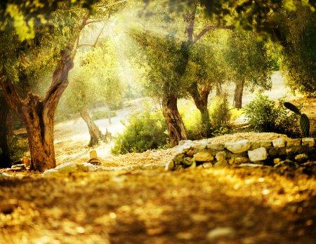 Hintergrund, Aussicht, Design, Kunst, Sonne, im Freien - B10677025