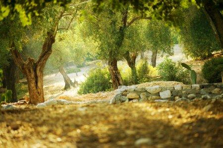 Hintergrund, Aussicht, Design, Kunst, im Freien, Natur - B10677022