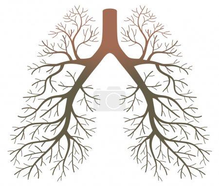 Vektor, Hintergrund, Illustration, isoliert, Risiko, Gesundheit - B21361033