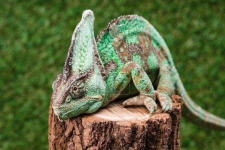 gruen farben farbenfroh schoen hell sitzend