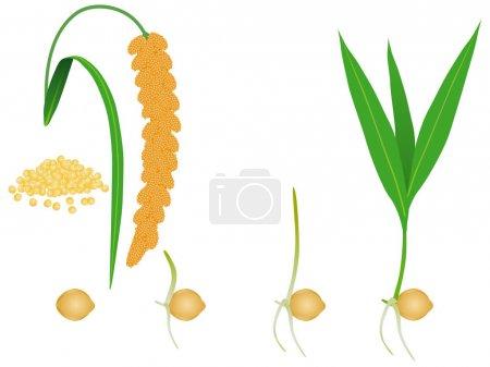 grün, weiß, Vektor, Hintergrund, Illustration, klein - B281125892