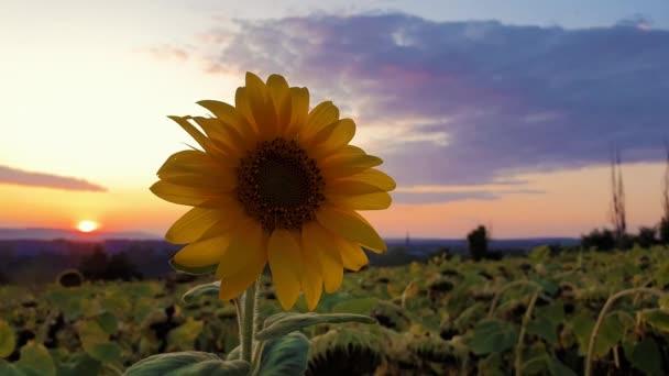 gruen gelb hintergrund himmel schoen single