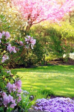 dynamisch schoen gras schoenheit park rasen