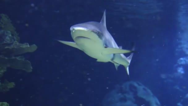 wasser fisch blasen unterwasser tauchen hai